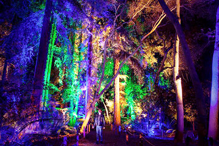 Private Events at Descanso Gardens Enchanted